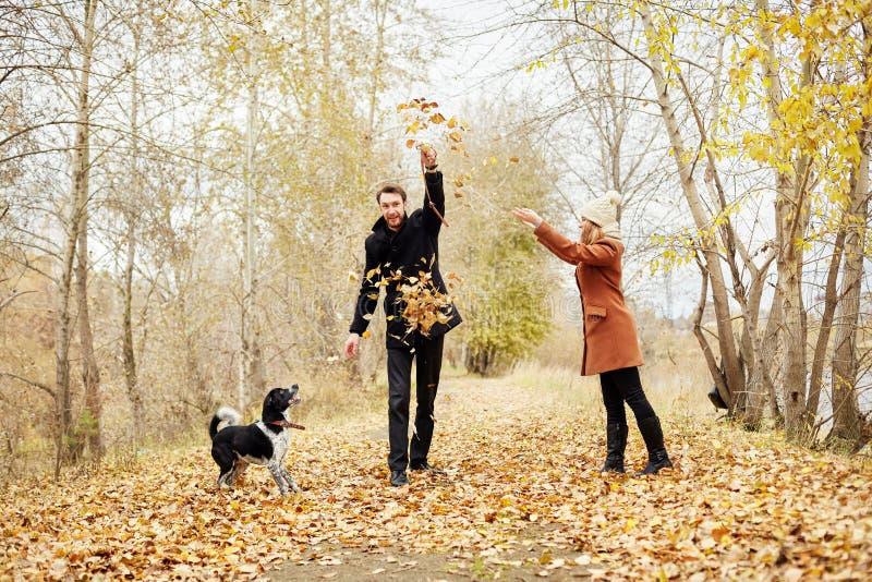 Kochający para spacer przez jesień lasu parka z spanielem obrazy royalty free