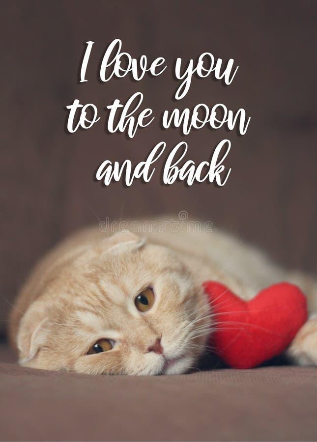 Kocham ciebie księżyc i popieram kartę Śliczny scottishfold kot z czerwonym sercem obrazy stock