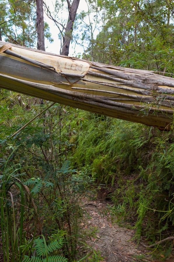 Kochanków inicjały na Spadać eukaliptusie obraz royalty free