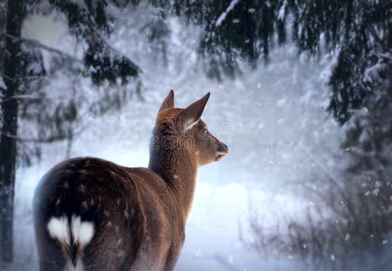 Kochany w zima lesie zdjęcia royalty free
