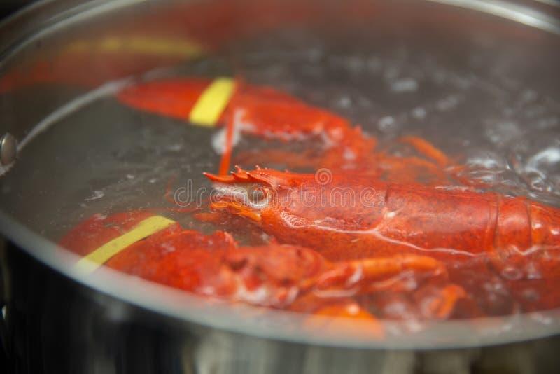 Kochende Maine Lobster stockfotos