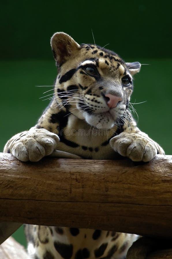 Koci, życzliwi zwierzęta przy Praga zoo, zdjęcie royalty free