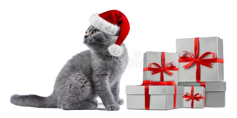 Koci się kota błękitnego brytyjskiego shorthair z czerwonym białym Santa kapeluszu prezentem zdjęcia stock