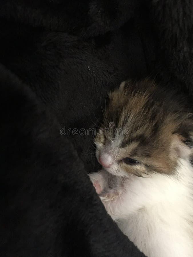 koci się, relaksuje, mały kot, zadziwiający kot, sypialny kot fotografia royalty free