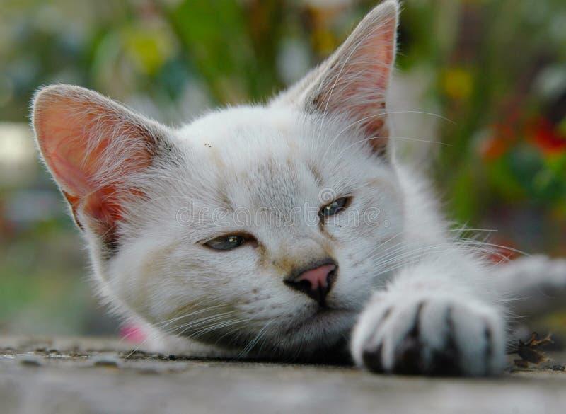 kociak spa?a obraz stock