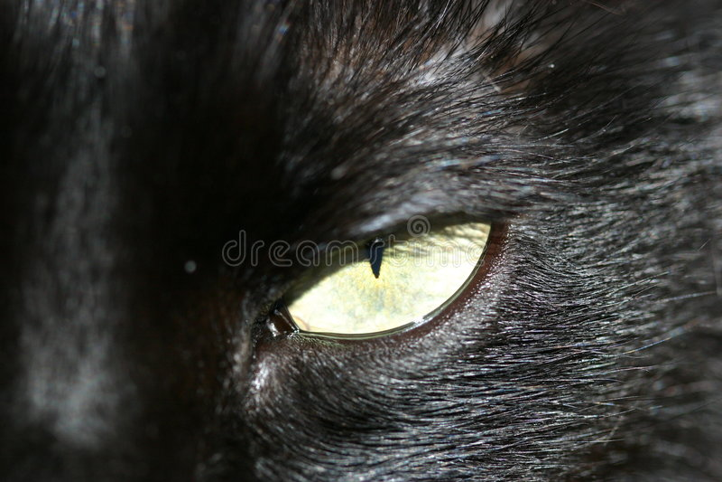 ' kocie oczko ' zdjęcia stock