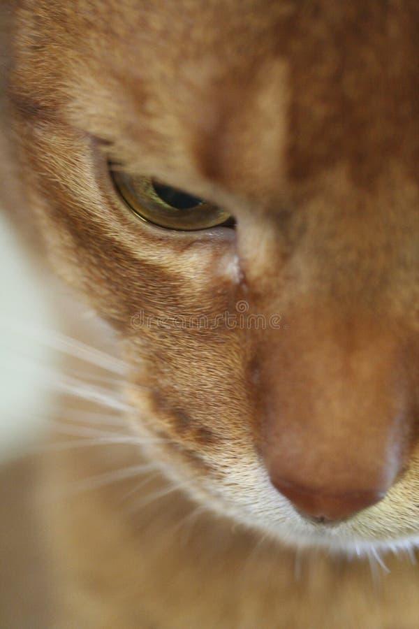 ' kocie oczko ' s zdjęcie royalty free
