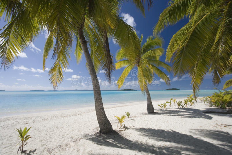 Kocköar - Aitutaki lagun royaltyfri foto