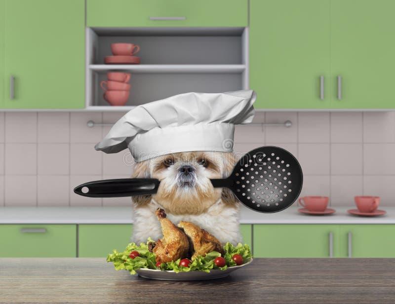Kockshitzuhund som rymmer en sked royaltyfria foton