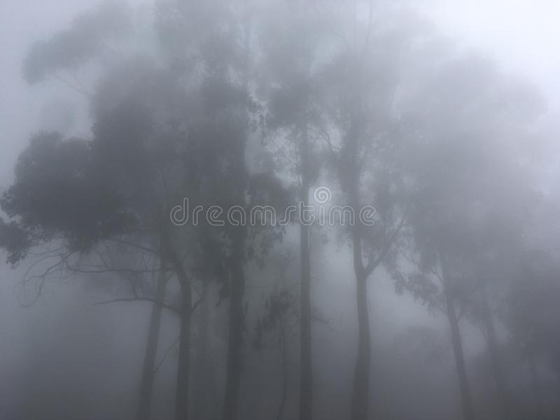 Kodai Kanal photo stock
