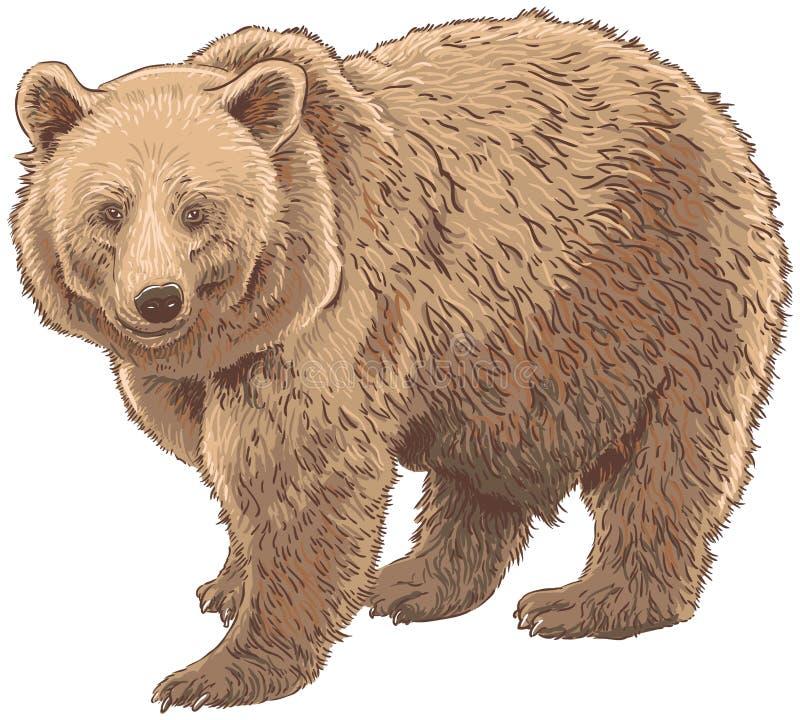 Kodiakbjörn stock illustrationer