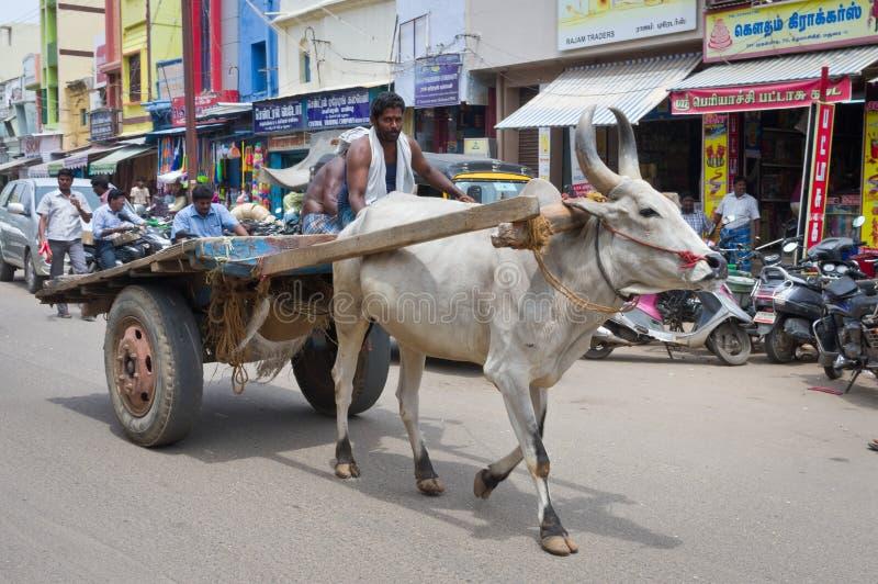 Koe bij de straat in Madurai, India royalty-vrije stock foto's