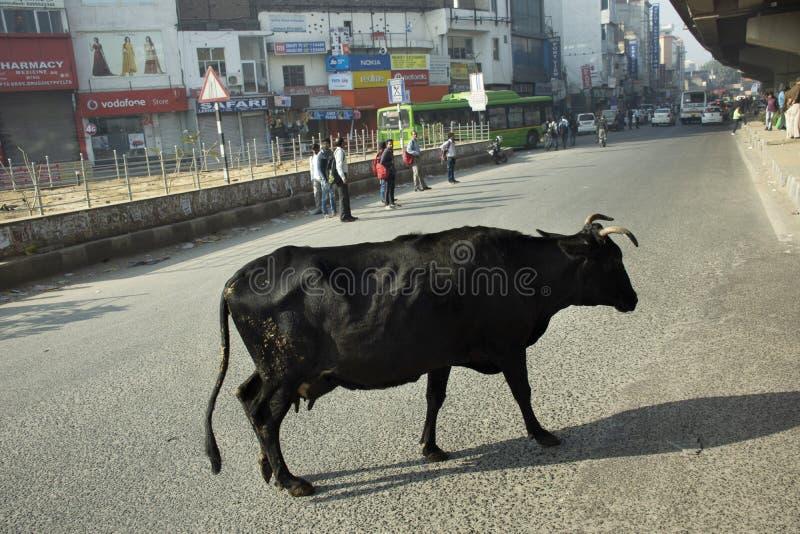 Koe die op de straat en het Indische peoplewalking op de hoofdweg met opstopping in ochtendtijd in New Delhi, India lopen stock afbeelding