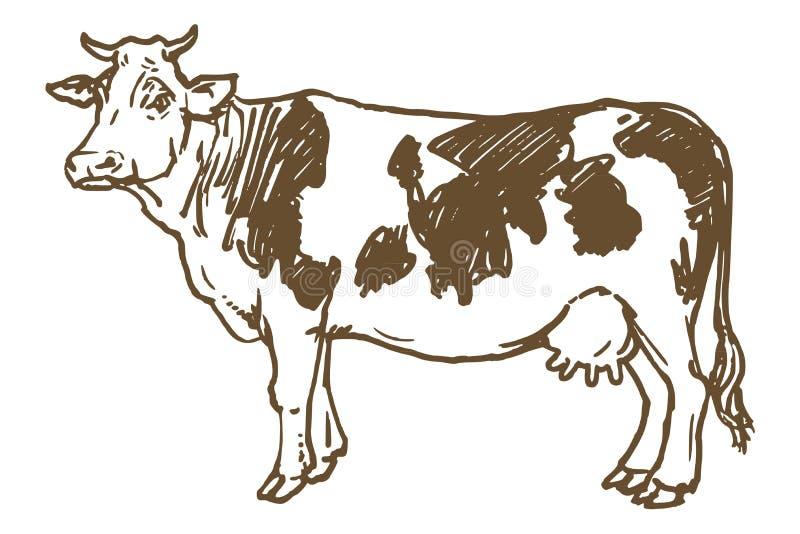 Koe die op wit wordt geïsoleerdw vector illustratie