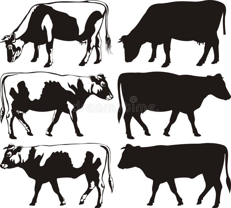 Koe en stier - silhouetten stock illustratie