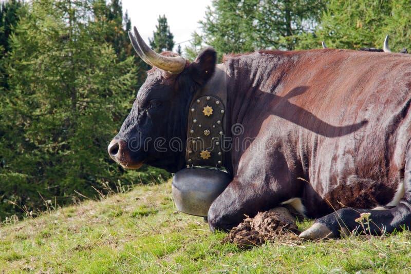 Koe met een klok stock afbeelding