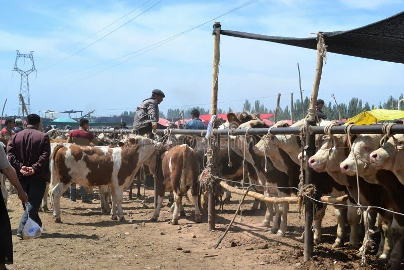 Koeien bij Uyghur-de bazaarmarkt van het Zondagvee in Kashgar, Kashi, Xinjiang, China royalty-vrije stock foto