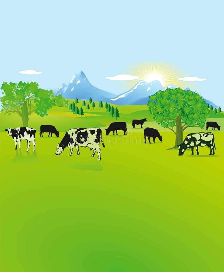 Koeien die in het platteland weiden royalty-vrije stock foto's