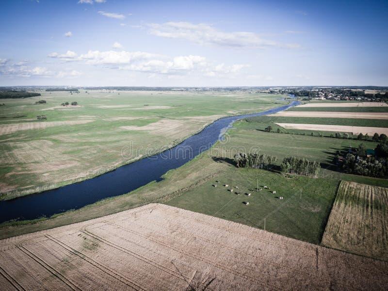 Koeien die op groen weiland door een rivier weiden royalty-vrije stock afbeelding