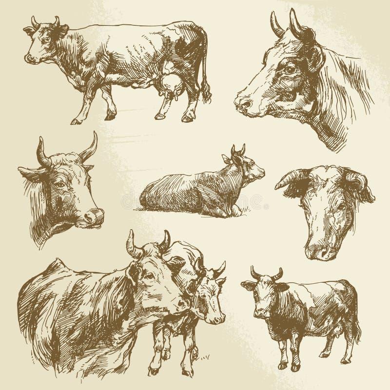 Koeien, landbouwbedrijfdier vector illustratie