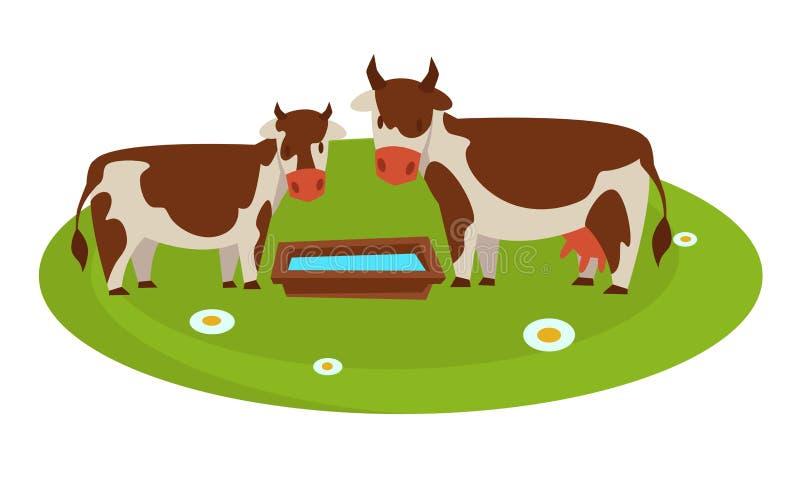 Koeien met houten troghoogtepunt van water op gebied vector illustratie