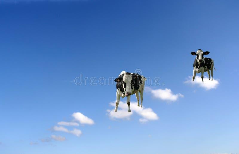Koeien op wolken stock afbeelding