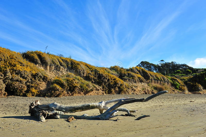 KoeKohe Strand Bei Otaga Neuseeland Stockbild - Bild von ...