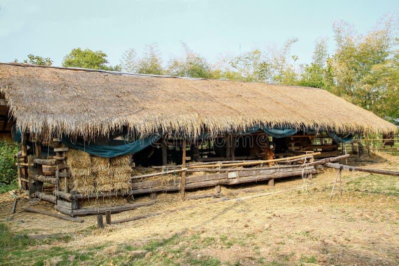 Koelandbouwbedrijf van hooi in Thailand stock foto