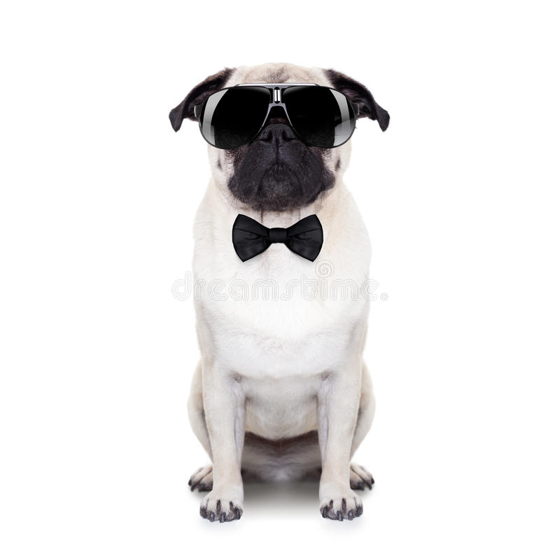 Koele hond royalty-vrije stock afbeelding