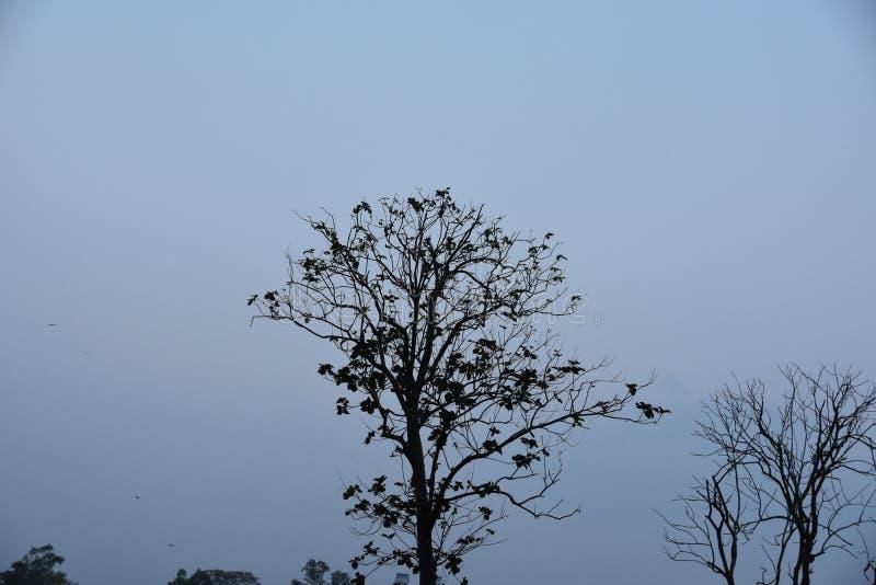 Koele ochtend bij DHAKA, Bangladesh stock foto