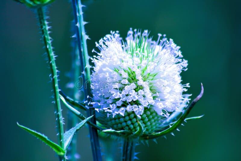 Koele witte bloem royalty-vrije stock afbeelding