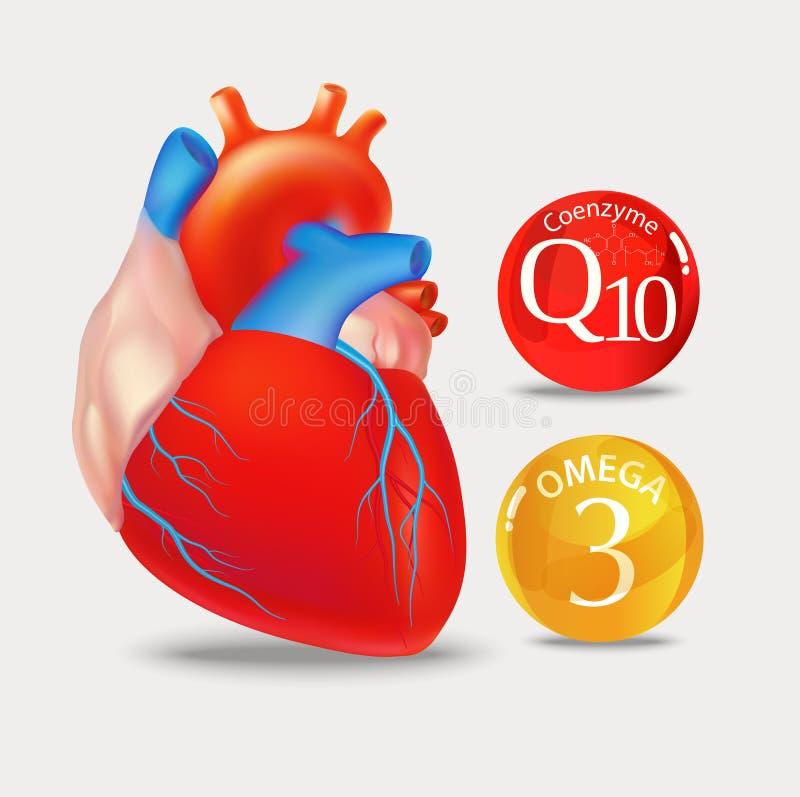 Koenzym q10 i omega 3 Serce royalty ilustracja