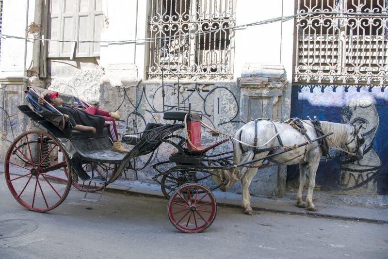 Koetsier die in door paarden getrokken vervoer in straat van Havana, Cuba rusten royalty-vrije stock fotografie