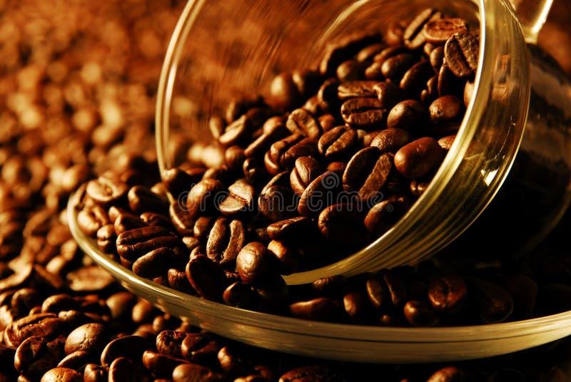 Koffein lizenzfreie stockfotografie