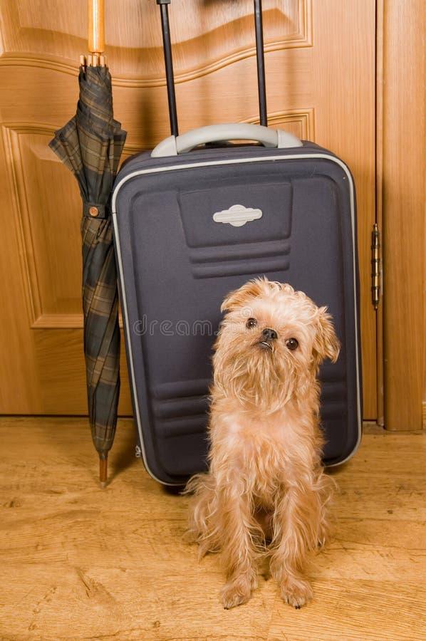 Koffer, Regenschirm und Hund. lizenzfreie stockbilder