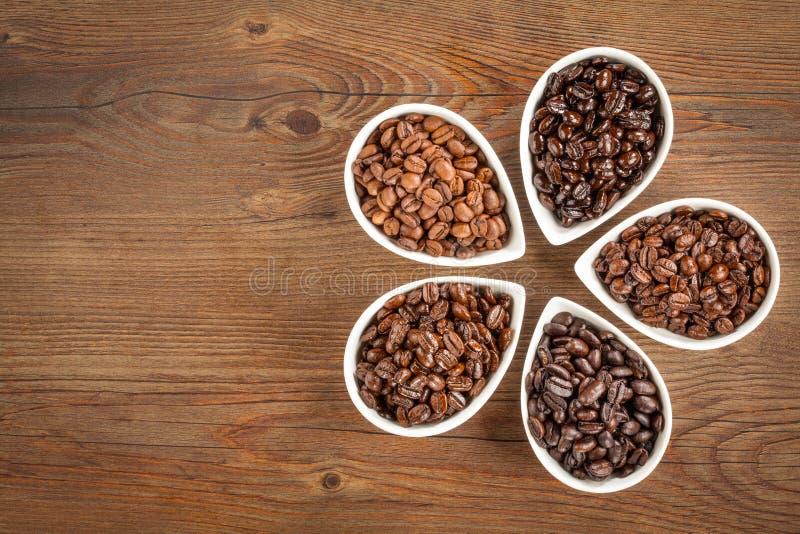 Koffie Bean Varieties stock fotografie