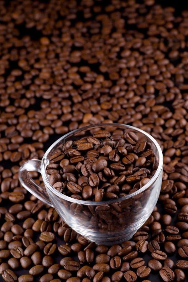 Koffie-bonen stock fotografie
