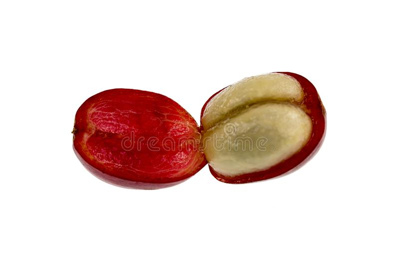 Koffie Cherry Fruit Anatomy royalty-vrije stock afbeelding