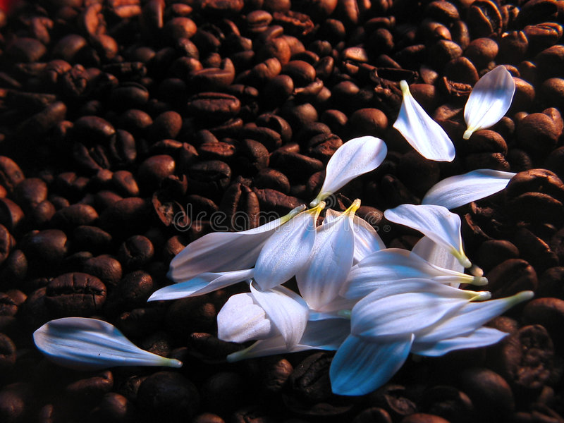 Koffie met melk royalty-vrije stock afbeeldingen