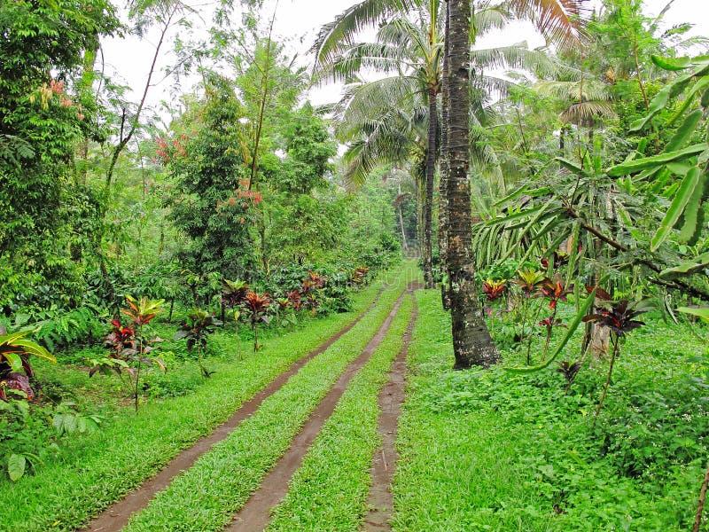 Koffieaanplanting stock fotografie