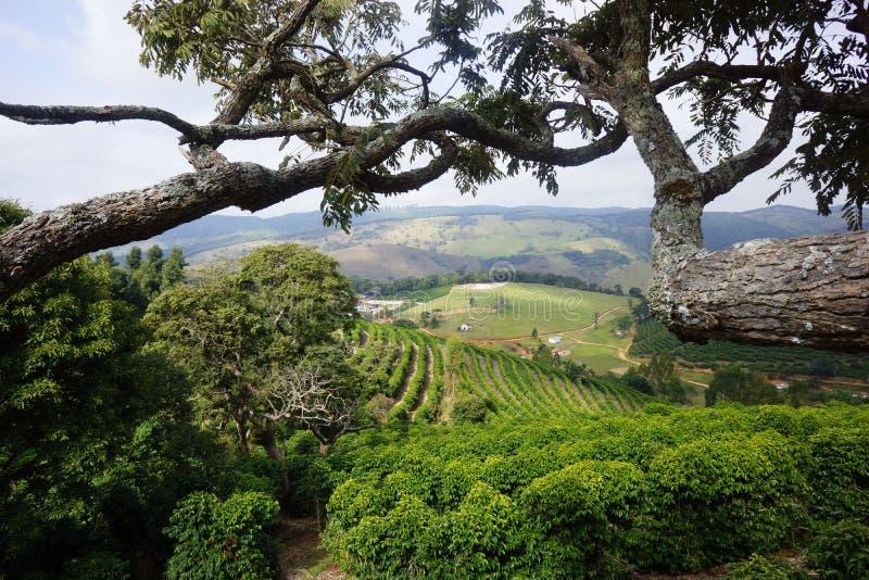 Koffieaanplanting in de landelijke stad van Carmo DE Minas Brazil stock foto