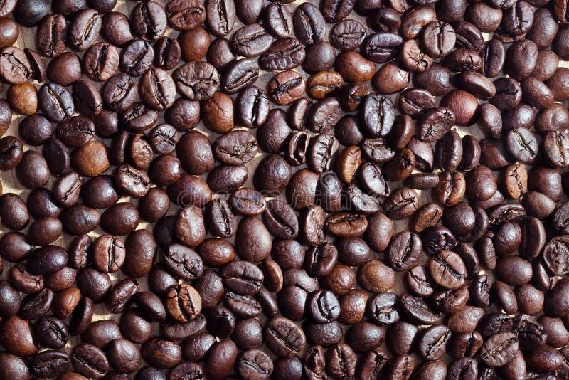 Koffiebonen in een kop stock foto