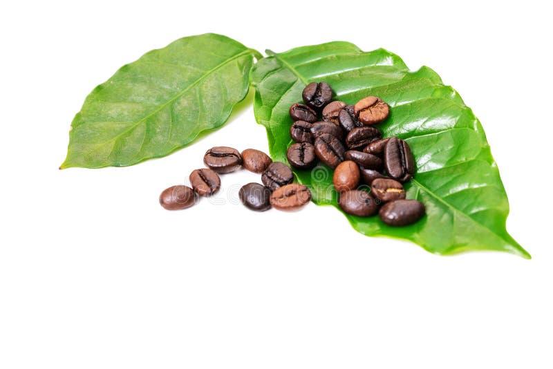 Koffiebonen en koffieverlof op witte achtergrond royalty-vrije stock foto's