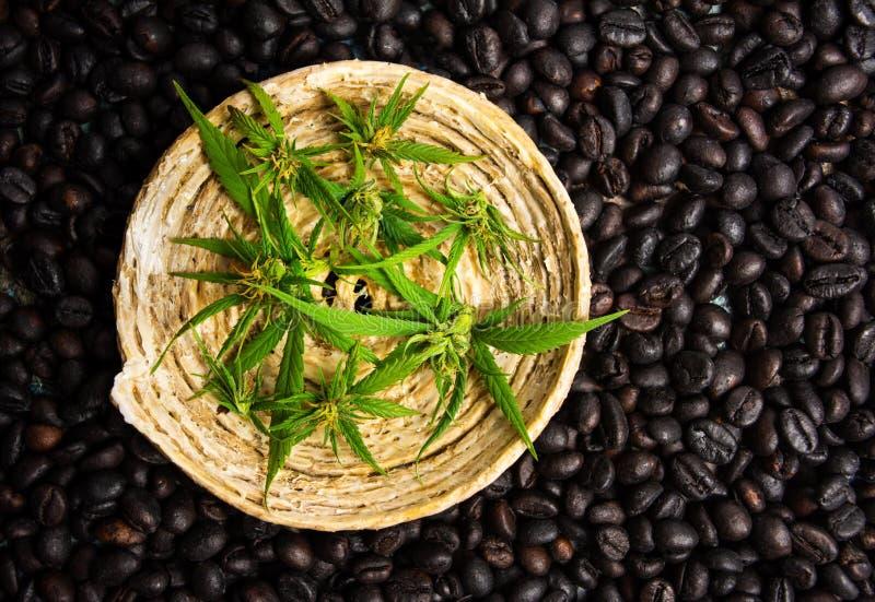 Koffiebonen met de achtergrond van marihuanabladeren stock afbeelding