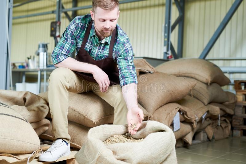 Koffievervaardiging die Koffiebonen onderzoeken royalty-vrije stock afbeelding