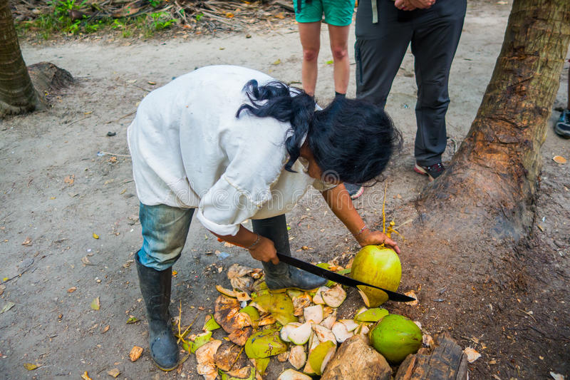 Kogi people, indigenous ethnic group, Colombia. MAGDALENA, COLOMBIA - FEBRUARY 20, 2015: Unknown young man cutting coconuts belonging to the Kogi people stock image