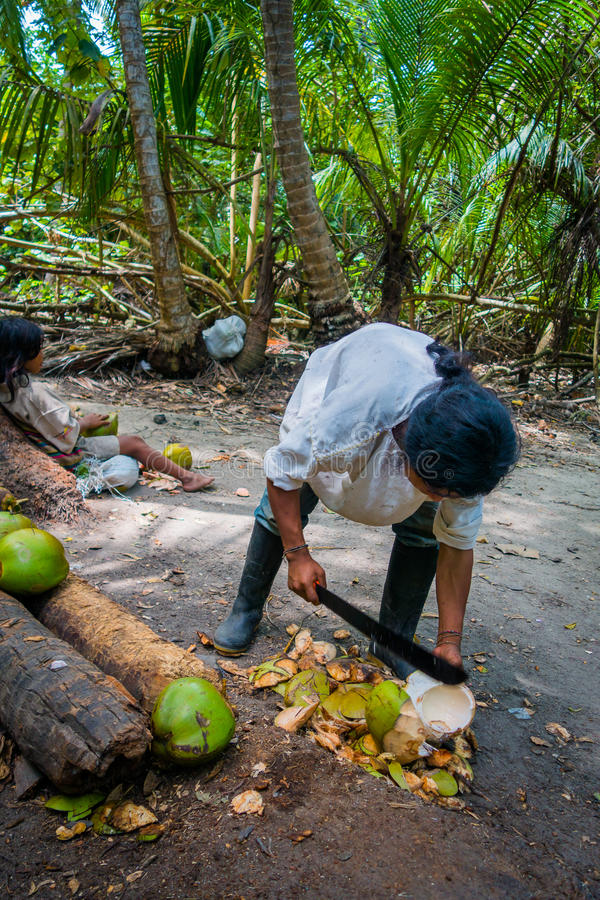 Kogi people, indigenous ethnic group, Colombia. MAGDALENA, COLOMBIA - FEBRUARY 20, 2015: Young man cutting coconuts, Kogi people, indigenous ethnic group, living stock images