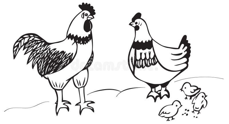 Kogutów kurczątka i kurczak ilustracji
