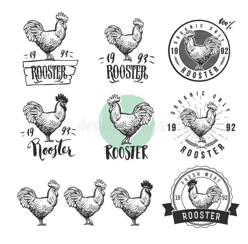Kogut kogut Kurczaka produktu logotypy ustawiający Kurni mięsa i jajko rocznika produkt spożywczy elementy Odznaki i projektów el ilustracja wektor