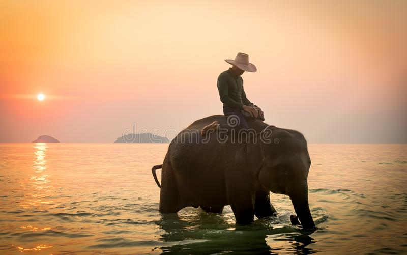 Koh Chang, Thailand. 02-Feb-2018. Man riding an elephant in the ocean during sunset stock photos